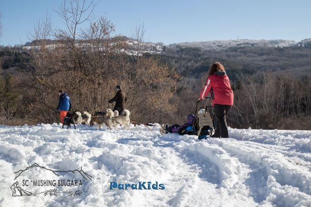 Зимна забава с кучешки впряг